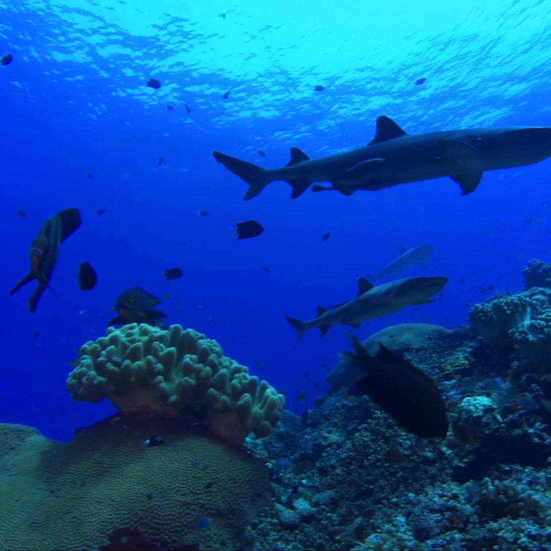Why Do Sharks Matter?