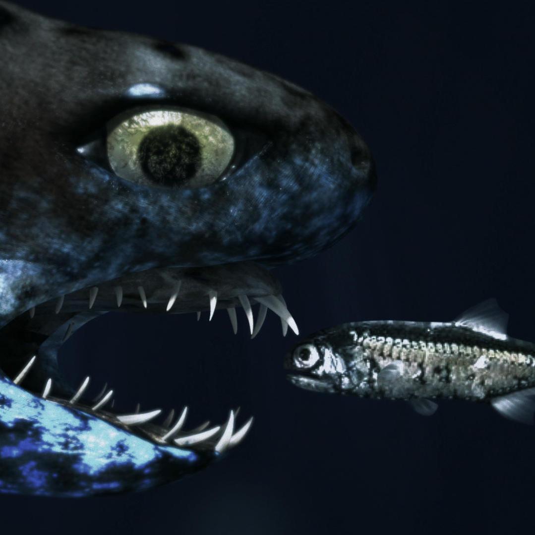 Glow-in-the-Dark Sharks