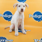 Ali-starting-line-up-PuppyBowl-11-RUFF