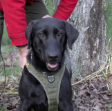 NWL NH dog with vest