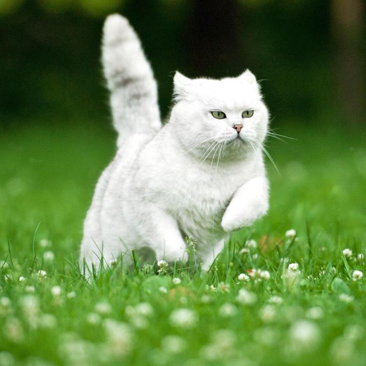 cats animal planet