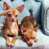 From Chihuahuas to Great Danes, Dogs 101 has got pups of all sizes cov