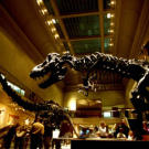 The Dinosaur Hall at the National Museum of Natural History houses a wide variety of dinosaur skeletons, from fearsome carnivores to massive herbivores. Next up, check out a partially excavated dino skull.