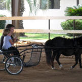 Bill and Jen drive a horse and buggy while visiting an Arabian horse farm with family.  These two aren't going to sit and watch the horses run around; they take the reins and lead a pony around the farm.