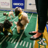 Puppy Bowl XI Behind the Scenes Photos