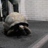 A tortoise at the Bronx Zoo