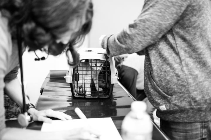 All animals get a medical check up upon arrival.