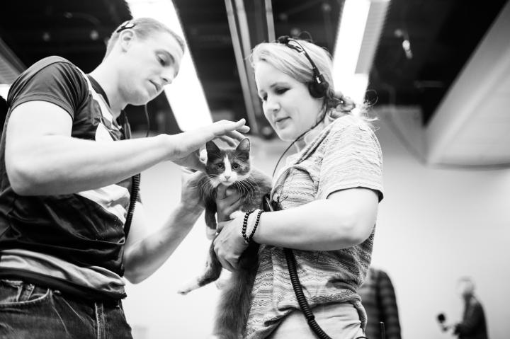 Production Assitants helping a kitten with her collar.