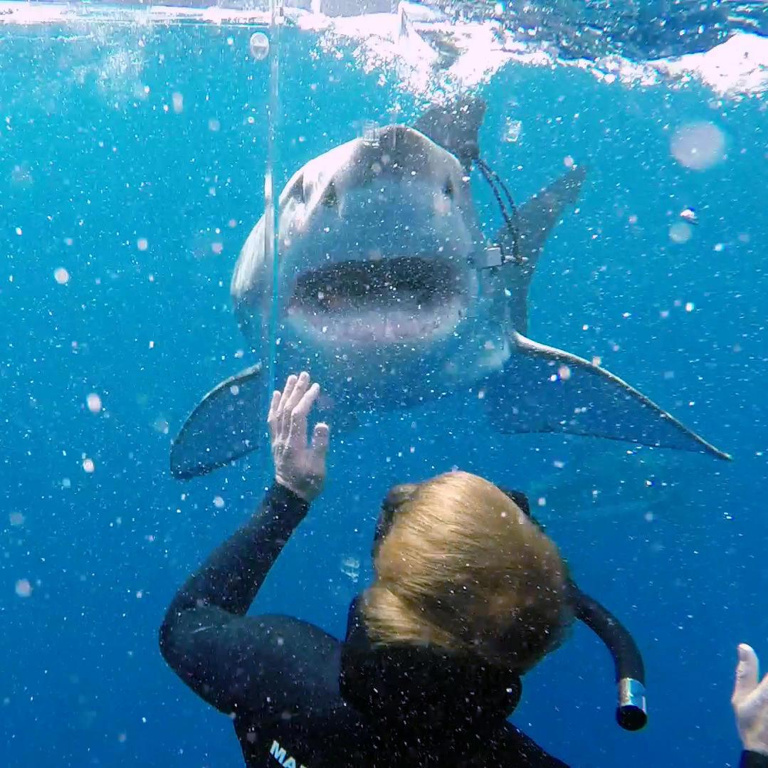 Shark Week 2015 Video Highlights
