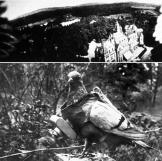 pg-01-animals-pigeon-bi-plane