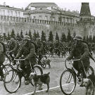 The procession of war dogs in Moscow's Red Square continues, 1938.