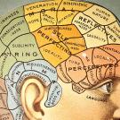 Feel around your head for bumps, lumps, ridges and humps. Got it? OK, now look up those bumps on the chart above. Do they describe your mental and emotional characteristics perfectly? No? Then congratulations! You have become the umpteen-billionth person to discover that phrenology is hogwash.