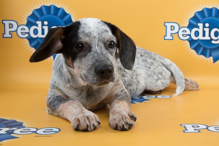 Bandito Puppy Bowl 11