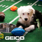 Puppy Bowl X Stadium Pictures