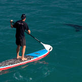 """""""Chris (Fallows) had to learn how to paddleboard for this scene,"""" says producer Jeff Kurr. """"He had never been on one 24 hours before we shot this. I totally left it up to him, but he was bound and determined to show people that these giant, 14-foot white sharks cruising in the shallows were not aggressive. Curious yes, aggressive no."""