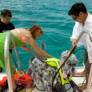 Robodog joined Kari, Grant and Tory in the Bahamas during Shark Week 2008.