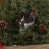A cute kitten gets caught in a wreath.