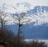 Trees in front of a large, snow capped mountain range, with a nest in one of the trees.