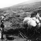 Prospectors in the Klondike gold fields use a team of horses to drag o