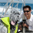 Do dogs splashing about in the water attract sharks? Grant Imahara put