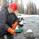 "Todd Hoffman and his dog Blue use traditional panning for a quick test of potential gold content in ""glory hole"" dirt brought up by Jack Hoffman. Blue sticks with Todd whenever they're out of the camp compound and provides an invaluable early warning system for bears and other dangers."