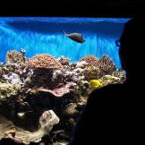 Aquariums welcome a part of nature into our homes that we may never ot