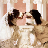 Springer spaniel bride and groom