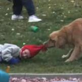This dog attempts his own version of a hat trick!