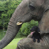And, meet Bubbles the elephant.