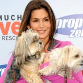 Cindy Crawford   Cindy Crawford hosts the Propel Zero to 1000 Celebrit