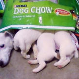 "Eat and Sleep - Daisy and Pups: Submitted by Tiffany -""Daisy (Jac"