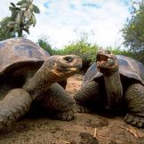9. The Galápagos Tortoise Tortoises are not known for living li