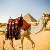 7. The Camel  Even back in the biblical days, men depended on camels a