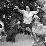 British-born actress Elizabeth Taylor surrounded by dogs, circa 1947.