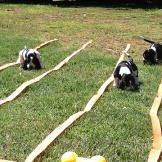 Puppy Olympics?