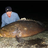 The goliath grouper is unique in both its massive size (they can grow