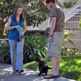 Lu Lu walking outside on harness with Amanda and Matt.