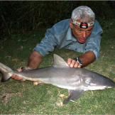 The bull shark flexed strongly several times on land, making it hard t