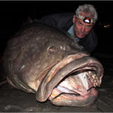 Jeremy Wade with a gigantic Queensland grouper, the largest fish he'd ever caught prior to Season 2 of River Monsters.