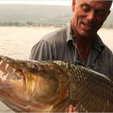 The main challenge of hooking a goliath tigerfish is rigging the bait.