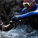 Jeremy Wade uses protective gloves to capture a Japanese giant salaman