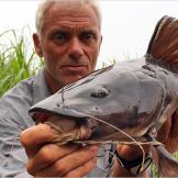 Jeremy Wade with a relatively small Kamba catfish. This fish is capabl