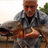 Not a pretty fish, the African lungfish is a harmless but truly frightening-looking river monster. The largest specimens can reach about 6.6 feet in length.