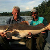 The red-tailed catfish has a huge, bony head and leathery body. This f