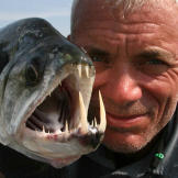 Jeremy Wade with a payara, caught in Uraima Falls in Venezuela. A difficult catch, the payara will swim with the current of the falls when hooked.