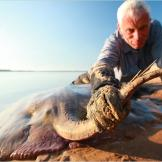 Jeremy Wade holds the barbed tail of a short-tailed river stingray. Ea