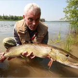 A northern pike, a popular sport fish in North America and Europe. Thi
