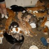 A number of Marie's cats gather in the kitchen to eat.