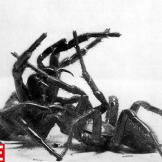 Arachnid Attack, 1950 Hulton Archive/Getty ImagesSee more photos from