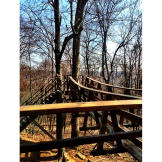 The Treetop Taphouse